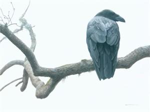 "Robert Bateman Handsigned & Numbered Limited Edition Print :""Lone Raven"""