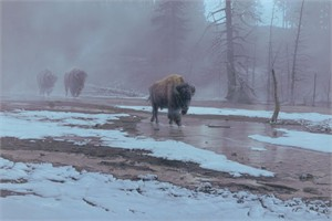 "Daniel Smith Handsigned & Numbered Limited Edition:""Yellowstone Procession"""