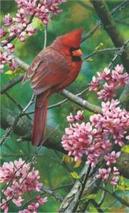 "Carl Brenders Limited Edition Print:""Spark of Ruby - Cardinal """