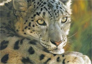 "Carl Brenders Handsigned & Numbered Limited Edition Canvas:""West of the Moon-Snow Leopard """