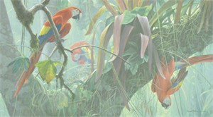 "Robert Bateman Handsigned & Numbered Limited Edition Giclee on Canvas:""Scarlet Macaws """