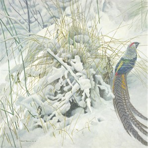 "Robert Bateman Handsigned & Numbered Limited Edition Print:"" Lady Amherst Pheasant"""