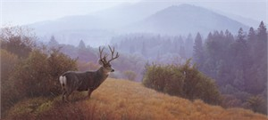"Daniel Smith Handsigned & Numbered Limited Edition :"" Autumn Haze-Mule Deer"""