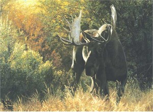 "Carl Brenders Handsigned & Numbered Limited Edition Print:""Sudden Encounter-Bull Moose """