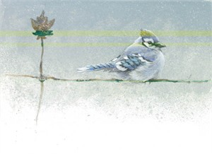 "Robert Bateman Handsigned and Numbered Limted Edition Print:""Winter Blue - Blue Jay - SOLD OUT """