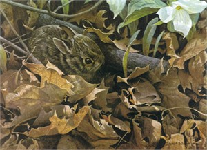 "Robert Bateman Anniversary Limited Edition Giclee on Canvas:""Among the Leaves - Cottontail"""