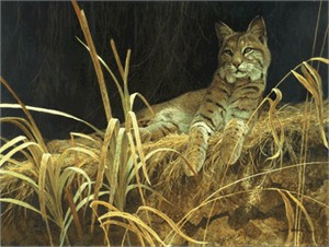 "Robert Bateman Handsigned & Numbered Limited Edition Print:""Riverbank Retreat - Bobcat"""