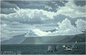 "Wilhelm Goebel Limited Edition Paper Print:""Straight Course - Orcas"""