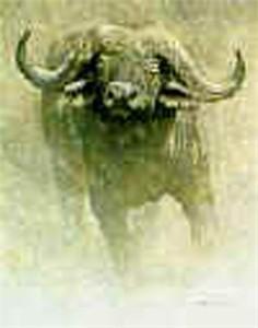 "Robert Bateman Limited Edition Paper Print:""African Buffalo-Sappi"""