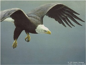 "Robert Bateman Limited Edition Lithograph:""Approach-Bald Eagle"""