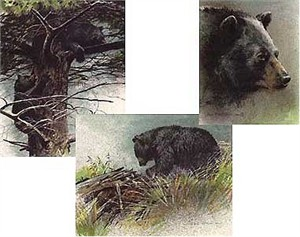 "Robert Bateman Handsigned and Numbered Limited Edition Lithograph on Paper:""Black Bear Predator Portfolio - Set of Three"""