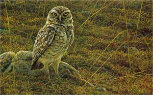 "Robert Bateman Limited Edition Paper Print:""Burrowing Owl"""