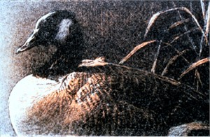"Robert Bateman Limited Edition Lithograph:""Canada Goose"""