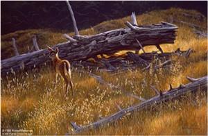 "Robert Bateman Limited Edition Paper Print:""Golden Light - Black-Tailed Fawn"""