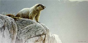 "Robert Bateman Limited Edition Paper Print:""Hoary Marmot"""