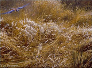 "Robert Bateman Limited Edition Paper Print:""Kestrel And Grasshopper"""