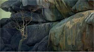 "Robert Bateman Limited Edition Paper Print:""Kopje Lookout - Leopard"""