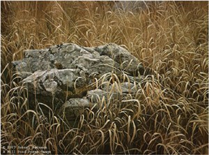 "Robert Bateman Limited Edition Paper Print:""Near Glenburnie"""
