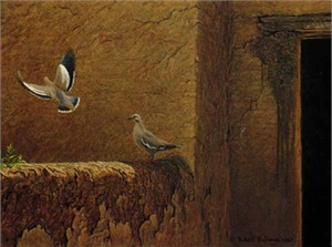 "Robert Bateman Limited Edition Paper Print:""Old Adobe - White Winged Doves"""