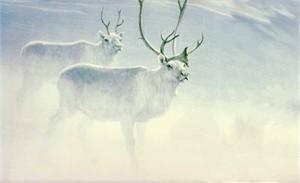 "Robert Bateman Limited Edition Paper Print:""Peary Caribou"""