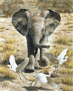 "Carl Brenders Hand Signed and Numbered Limited Edition Print:""Flushing Egrets - Baby Elephant"""