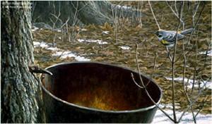 "Robert Bateman Limited Edition Paper Print:""Sap Bucket-Myrtle Warbler"""