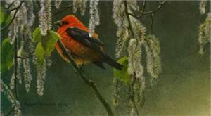 """Robert Bateman Limited Edition Paper Print:""""Scarlet Tanager Alder Blossoms"""""""