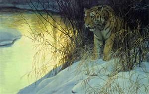 "Robert Bateman Limited Edition Paper Print:""Siberian Tiger"""