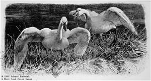 "Robert Bateman Limited Edition Print:""Wide Horizon-Tundra Swans Premier Ed"""