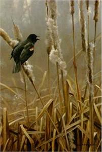 """Robert Bateman Limited Edition Print:""""Winter Cattails-Red-Winged Blackbird"""""""