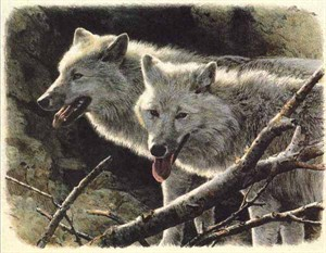 "Carl Brenders Limited Edition Lithograph:""White Wolves-No. American Portfolio"""
