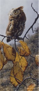 "Carl Brenders Limited Edition Print:""Fireball - Screech Owl"""