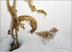 "Robert Bateman Hand Signed And Numbered Limited Edition Print and Canvas Giclee:""Tree Sparrow and Teasal"""
