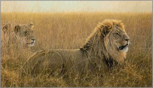 "Robert Bateman Hand Signed And Numbered Limited Edition Renaissance Collection Canvas Giclee:"" Lions in the Grass """