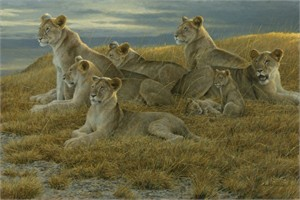 "Robert Bateman Hand Signed And Numbered Limited Edition Print  and Canvas Giclee :""Family Gathering - Lioness and Cubs"""