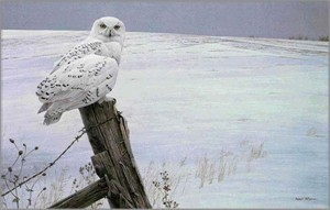 "Robert Bateman Hand Signed and Numbered Limited Edition Canvas Giclee: ""Ready for the Hunt (Snowy Owl)"""