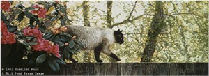 "Sueellen Ross Limited Edition Print:""Morning Patrol - Sylvie"""
