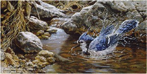 "John Seerey – Lester Limited Edition Print:""Bathing - Blue Jay"""