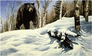 "John Seerey – Lester Limited Edition Print:""Breaking Cover - Black Bear"""