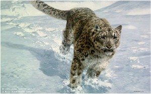 "John Seerey – Lester Limited Edition Print:""The Chase-Snow Leopard"""