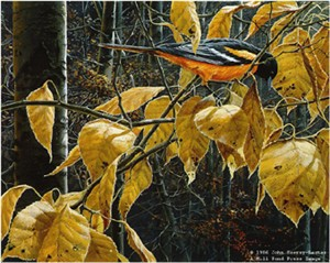 "John Seerey – Lester Limited Edition Print:""Cottonwood Gold-Baltimore Oriole"""