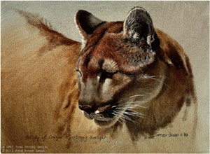 "John Seerey – Lester Limited Edition Print:""Cougar Head Study"""