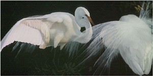 """John Seerey – Lester Limited Edition Print:""""The Courtship"""""""