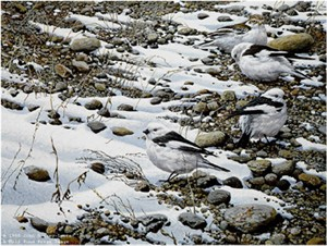 "John Seerey – Lester Limited Edition Print:""Early Arrivals - Snow Buntings"""