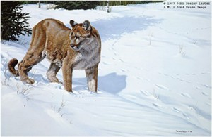"John Seerey – Lester Limited Edition Print:""First Tracks - Cougar"""
