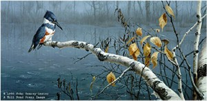 "John Seerey – Lester Limited Edition Print:""Rain Watch - Belted Kingfisher"""