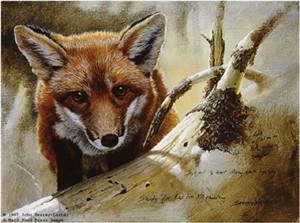 "John Seerey – Lester Limited Edition Print:""Red Fox Kit Study"""