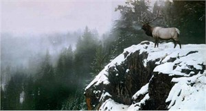 "Terry Isaac Limited Edition Print: ""King of the Mountain - Elk"""