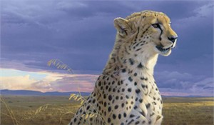 "Daniel Smith Hand Signed and Numbered Limited Edition:"" African Tempest - Cheetah """