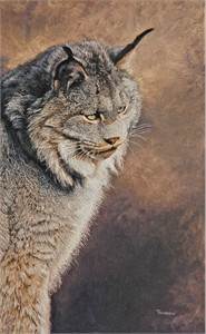 "Brent Townsend Hand Signed and Numbered Limited Edition Giclee on Paper :"" Lynx Study """